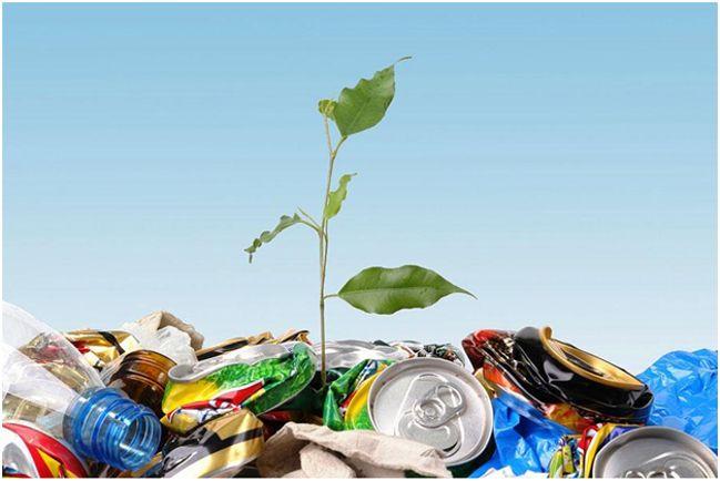 растение сквозь мусор