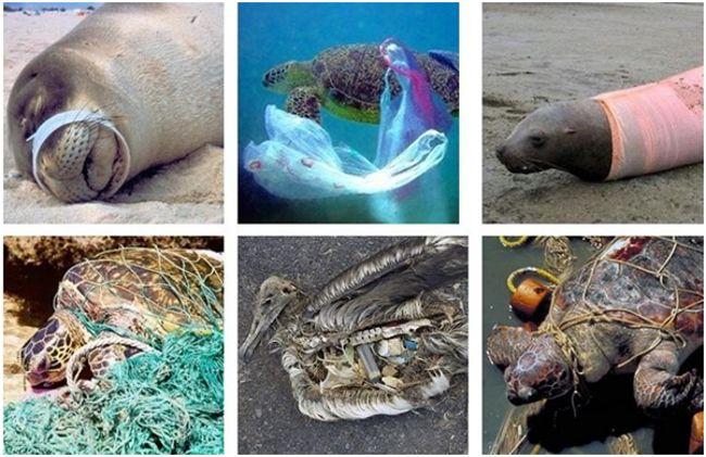 животные страдающие от мусора в океане