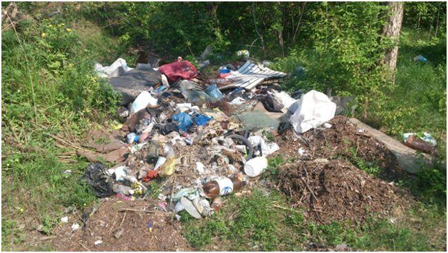 отходы в лесу